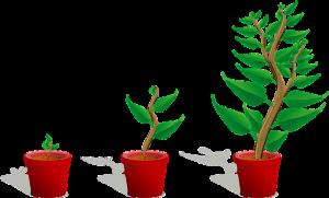 אדניות עץ זולות